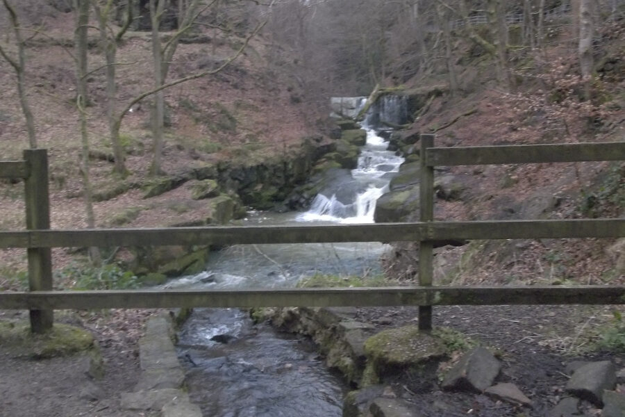 Friends of Healey Dell Nature Reserve