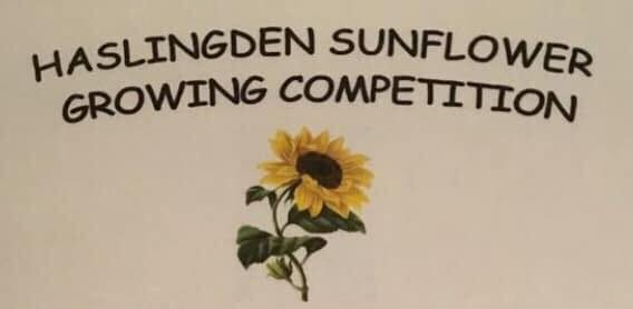 Sunflower Growing Competition