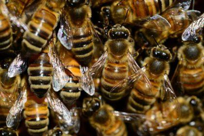 Bacup Beekeepers Club