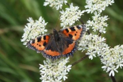 Summerseat Nature Reserve Open Day